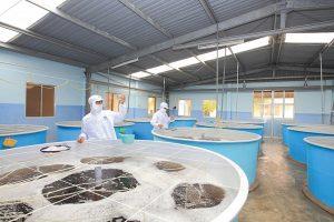 Tập đoàn Thủy sản Minh Phú dự kiến thu về 3.700 tỷ đồng từ đợt phát hành CP riêng lẻ