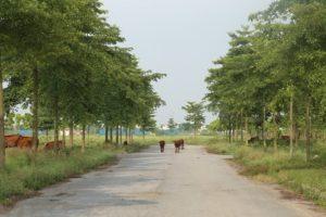 Thủ tướng yêu cầu kiểm tra phản ánh nhiều dự án đô thị tại Mê Linh bị bỏ hoang