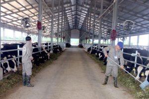 TH Group muốn đầu tư 2 dự án tổng trị giá gần 12.000 tỷ đồng tại Quảng Ninh