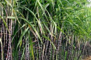 TTC Sugar được quỹ đầu tư nước ngoài rót 28 triệu USD