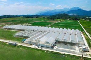 Thị trường quyền sử dụng đất nông nghiệp: Mô hình của Vingroup cũng gặp vướng mắc