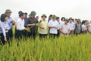 Trần Ngọc Nam: Người đưa thương hiệu gạo hữu cơ Việt ra thế giới