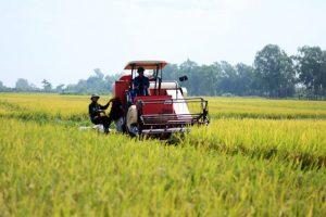 Nguy cơ mất thị trường Trung Quốc: Giải pháp nào cho gạo Việt?