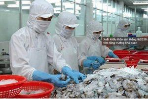 Xuất khẩu thủy sản tháng 9/2020: Thị trường tôm tăng trưởng khả quan
