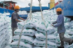 Giá gạo Việt Nam xuất khẩu tăng mạnh so với năm trước