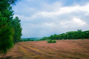 Gia Lai quyết chuyển đổi 174 ha đất rừng làm sân golf?