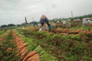 Bộ Công Thương kết nối doanh nghiệp thúc đẩy tiêu thụ nông sản tại Hải Dương