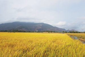 Thủ tướng đồng ý chuyển mục đích sử dụng hơn 70 ha đất trồng lúa tại An Giang