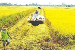 Chuyển mục đích sử dụng hơn 21 ha đất trồng lúa tại Cần Thơ