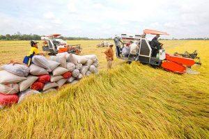 Xuất khẩu gạo hai tháng đầu năm 2021 giảm mạnh