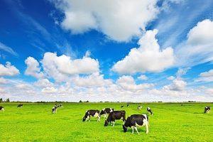 Mộc Châu Milk lên kế hoạch lãi cao nhất từ trước tới nay