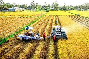 Giá gạo xuất khẩu Việt Nam giảm vì nhu cầu giảm