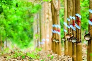 """Hụt thu đền bù đất, lợi nhuận 6 tháng của Cao su Phước Hòa """"lao dốc"""" 85%"""