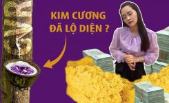 Cạp trúng cổ phiếu KIM CƯƠNG GVR ra tiền tỷ cách nào?